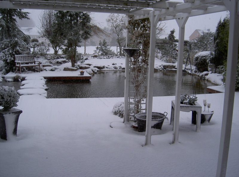 Winter impressionen vom schwimm teich for Gartenteich im winter