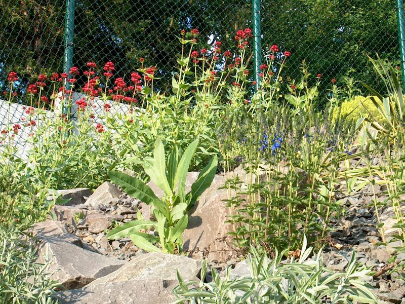 Schattiger steingarten anlegen 104555 eine for Schattiger garten gestalten