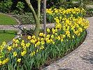 Garten mit zwiebelblumen im fr hling fertig for Gartengestaltung 700 qm