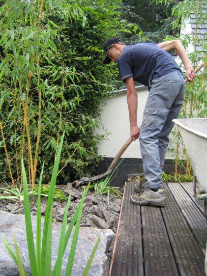 Bambus und andere pflanzen f r den schwimmteich for Welche teichfische fressen algen