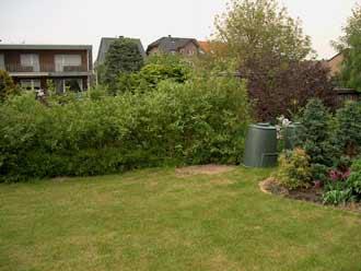 Hartriegelhecke und Pflanzbeete im kleinen Garten