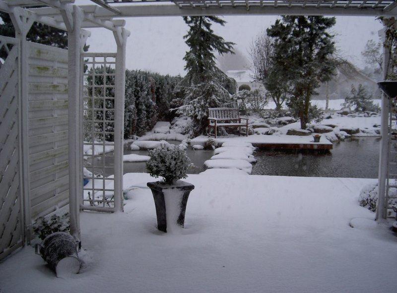 Winter impressionen vom schwimm teich for Teich im winter
