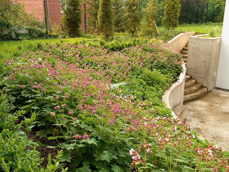 Der garten mit steingarten ist fertig for Bepflanzung terrasse