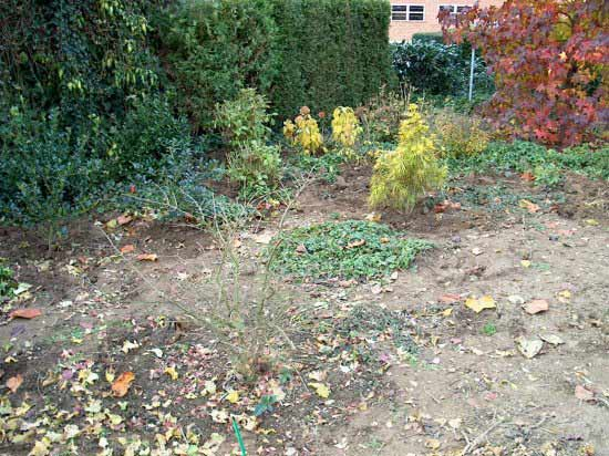 pflegeleichter garten, ein projektbeispiel, Garten und erstellen