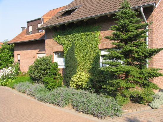 Planung f r einen vorgarten - Pflegeleichte vorgarten bilder ...