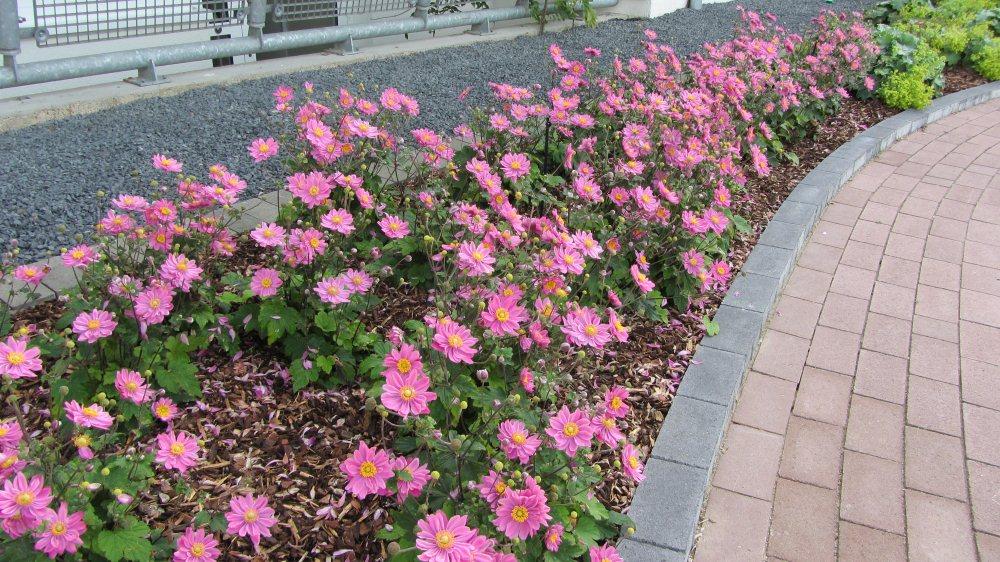 Friesenwall Bepflanzen friesenwall bepflanzen friesenwall mit bepflanzung als und