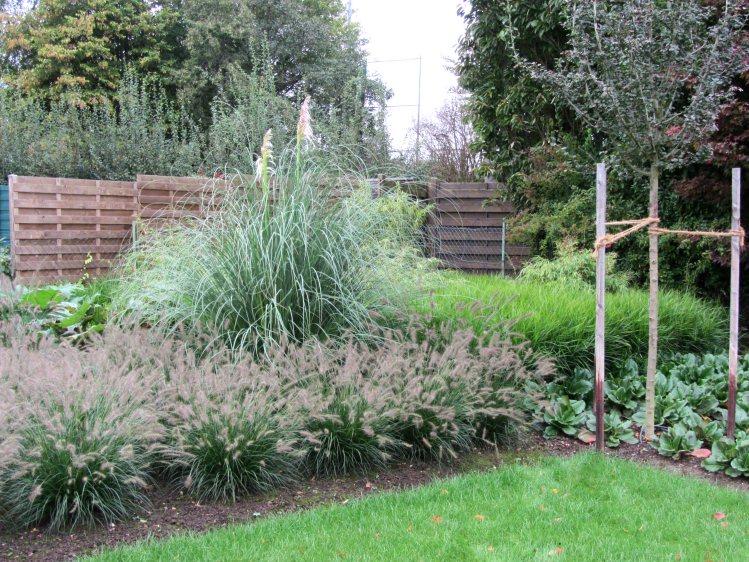 Garten mit gräsern gestalten  Gräser-Garten nach der Fertigstellung
