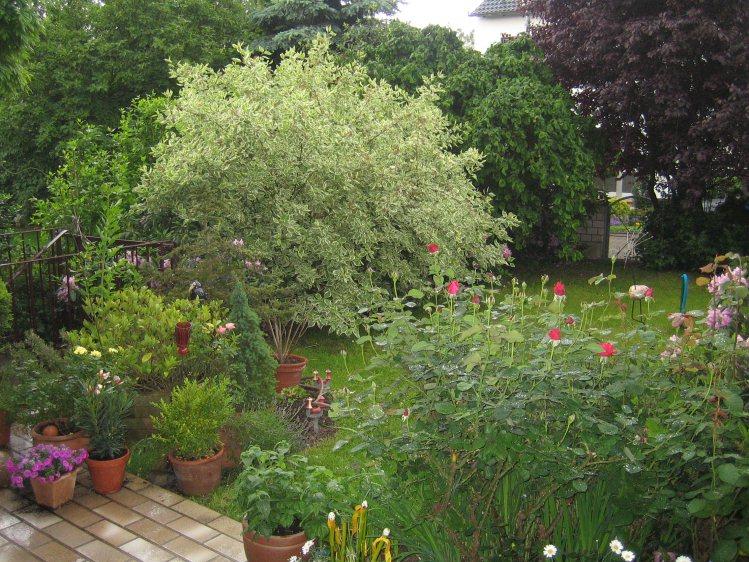 reihenhausgarten in bergheim bei köln – gartenplanung düsseldorf, Garten und Bauen