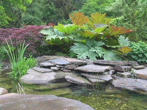 teichpflanzen wasserpflanzen repositionspflanzen im schwimmteich und teichrandbepflanzung. Black Bedroom Furniture Sets. Home Design Ideas