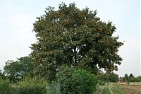 bäume über 15 m, Deko ideen