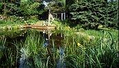 eingewachsener Teich