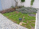 Bepflanzung im Vorgarten