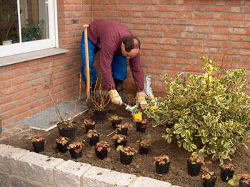 Mann bei Pflanzarbeiten