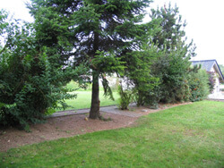 große Bäume im Garten