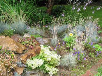 Steingarten mit typischen Pflanzen und Gräsern