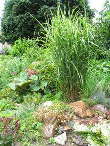 Steingarten mit Schilf als Blickfang