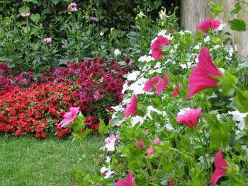 Sommerblumen-Demenzgarten