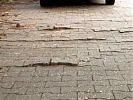 Pflaster angehoben durch Baumwurzeln