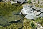 unregelmäßige Natursteinplatten füren in den Flachwasserbereich.