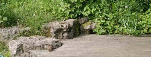 Holzterrasse, Steine und Pflanzen im Naturgarten