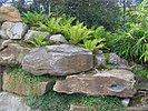 Farne als Bepflanzung zwischen den Felsbrocken, die den Hang abstützen