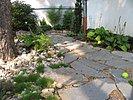 Polygonalplatten mit Fugenbewuchs im Garten