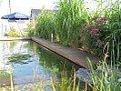 Bambus als Sichtschutz