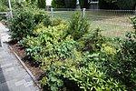 seitliche Bepflanzung