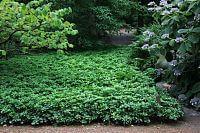 Stauden Für Schatten ? Gartenplanung Düsseldorf, Mönchengladbach ... Bodendecker Schatten Pflanzen