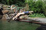 Kopfsprung in den Schwimmteich
