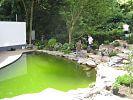 vorübergehend grünes Füllwasser im Teich
