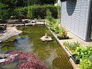 Wasserpflanzen für den Schwimmteich