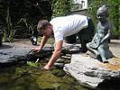Verankerung der Wasserpflanzen