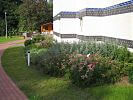 Bepflanzung am Haus