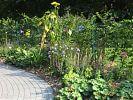 Bepflanzung am Zaun