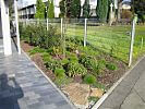 Gräserbeet im Vorgarten frisch bepflanzt