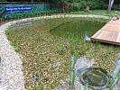 Naturerlebnisbad mit bepflanzter Flachwasserzone