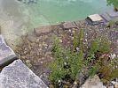 Unterwasser-Natursteinmauer trennt Tief- von Flachwasserzone.