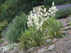 Pflanzung in einem Steingarten