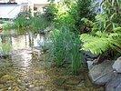 bepflanzte Flachwasserzone