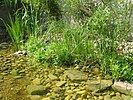Uferbepflanzung