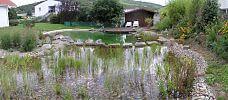 Wasserpflanzen in der Regenerationszone